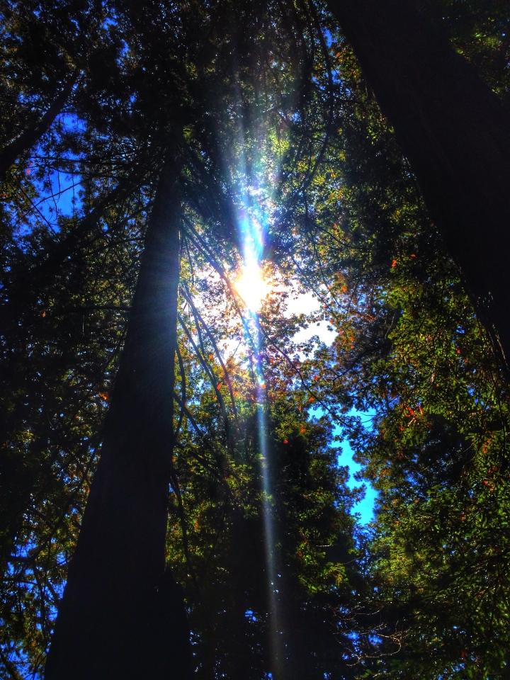 Shining bright light a diamond
